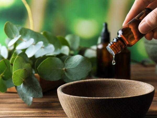 Uleiul de Arbore de ceai